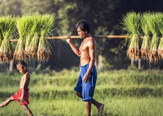 Nusabali.com - lahan-pertanian-produktif-di-denpasar-tinggal-2170-hektare