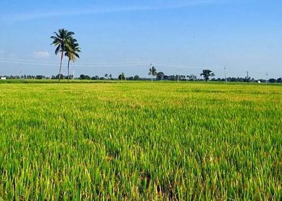 Nusabali.com - perwakilan-5-negara-belajar-subak-di-pejeng-kaja