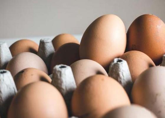 Nusabali.com - harga-telur-turun