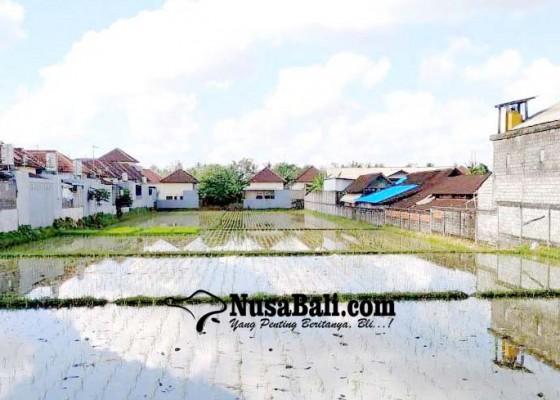 Nusabali.com - produksi-gabah-di-tabanan-tiap-tahun-meningkat