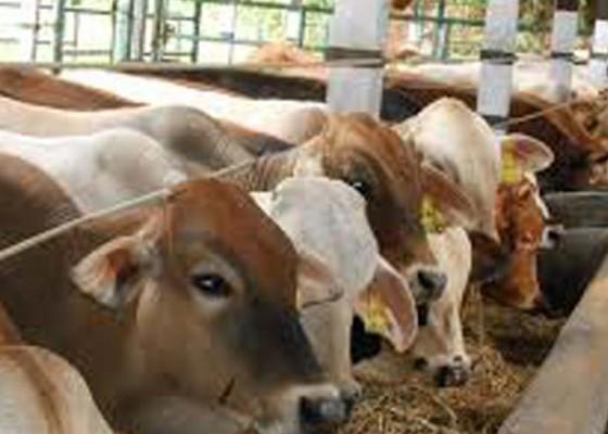 Nusabali.com - dinas-pertanian-dan-pangan-berikan-pelayanan-kesehatan-gratis-untuk-ternak