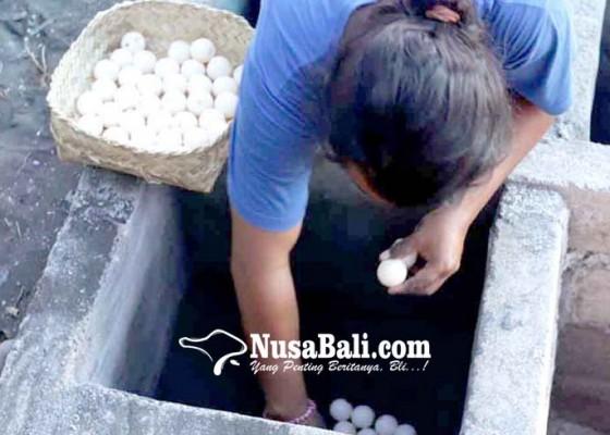 Nusabali.com - yowana-bhakti-segara-selamatkan-158-telur-penyu