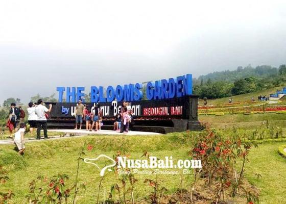 Nusabali.com - festival-the-bloom-garden-tampilkan-kemah-massal-dan-lari-lintas-alam