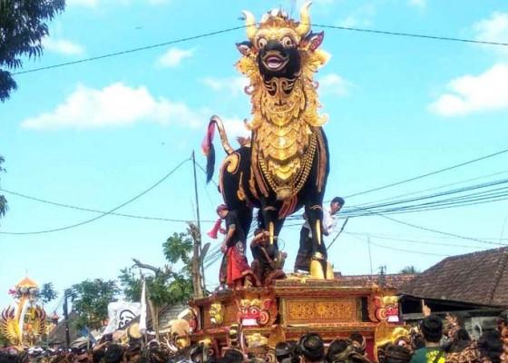 Nusabali.com - tempuh-jarak-1-km-lembu-seberat-3-ton-perlu-waktu-3-jam