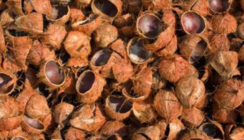 www.nusabali.com-desa-selemadeg-dibantu-4-mesin-olah-batok-kelapa