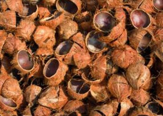 Nusabali.com - desa-selemadeg-dibantu-4-mesin-olah-batok-kelapa