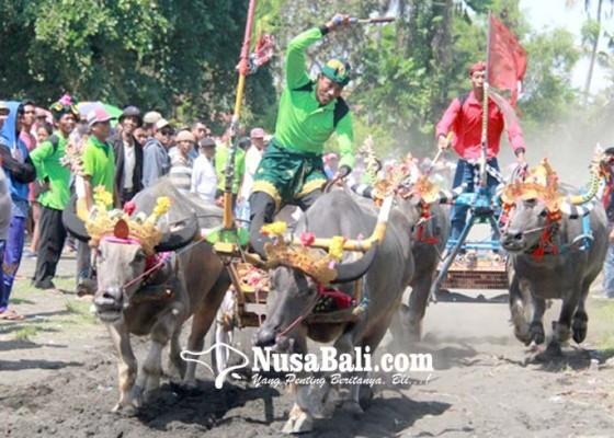 Nusabali.com - makepung-gubernur-cup-kembali-digelar-tahun-ini