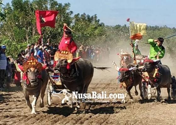 Nusabali.com - gubernur-harap-lomba-makepung-masuk-kalender-pariwisata
