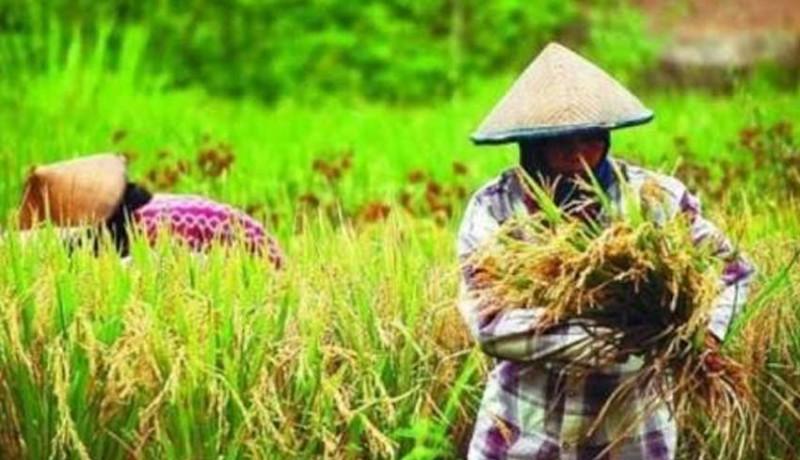 www.nusabali.com-produk-pertanian-perlu-sertifikasi