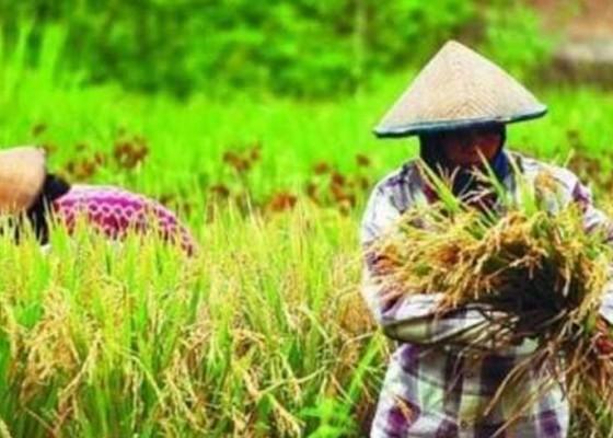 Nusabali.com - produk-pertanian-perlu-sertifikasi
