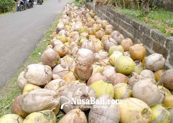 Nusabali.com - desa-megati-harapkan-bantuan-mesin-pembuat-minyak-vco
