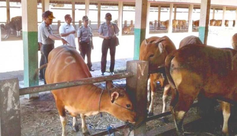 www.nusabali.com-cek-kesehatan-hewan-sebelum-disembelih
