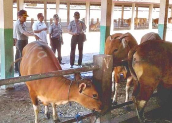 Nusabali.com - cek-kesehatan-hewan-sebelum-disembelih