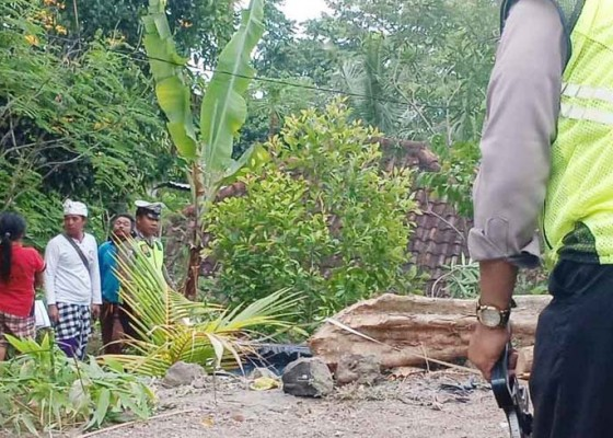 Nusabali.com - motor-matic-masuk-jurang-empat-orang-luka-luka