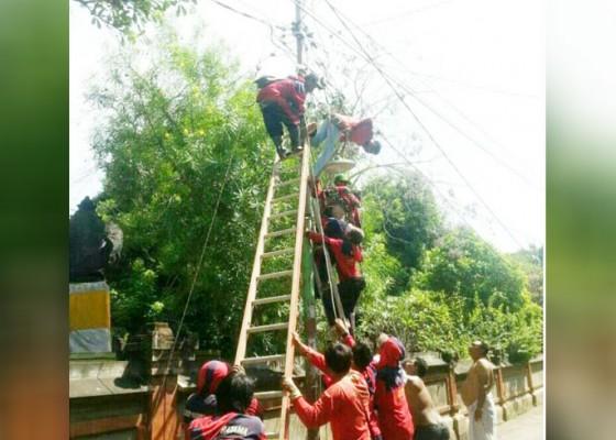 Nusabali.com - buruh-instalasi-listrik-tewas-kesetrum