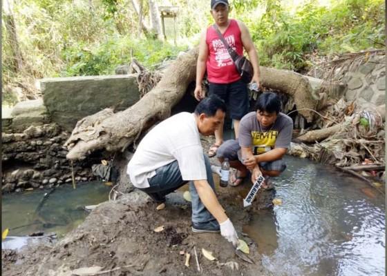 Nusabali.com - diduga-tercemar-racun-600-kg-ikan-nila-mati