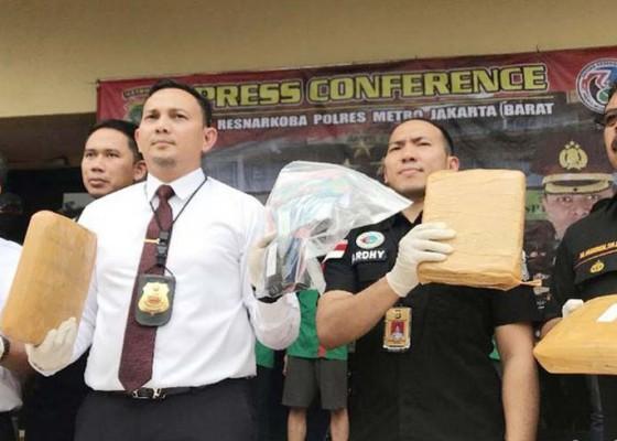 Nusabali.com - polisi-bongkar-bisnis-ganja-di-kampus