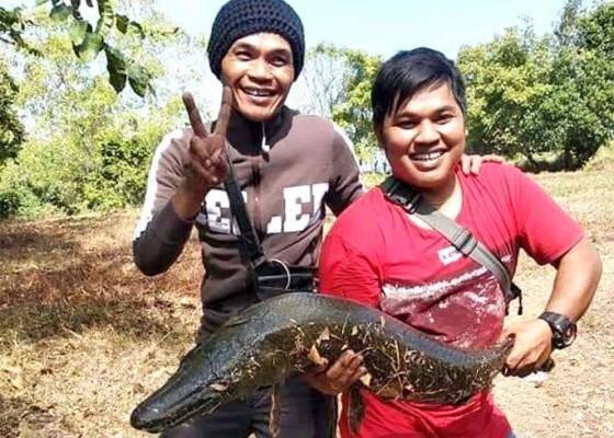 Nusabali.com - pemancing-ikan-gar-aligator-akan-diberikan-penghargaan
