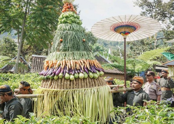 Nusabali.com - kirab-budaya-bedayan-pucuk-putri-daun-teh-kemuning