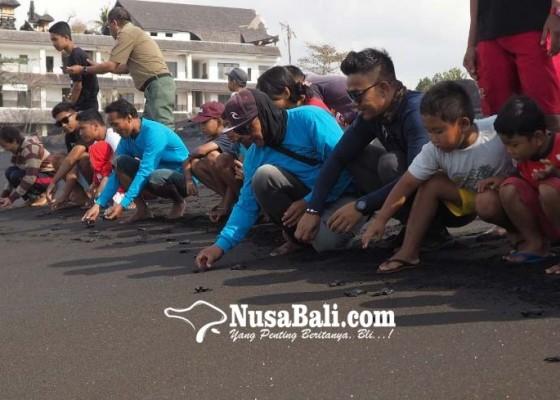 Nusabali.com - gelombang-tinggi-ancam-konservasi-tukik
