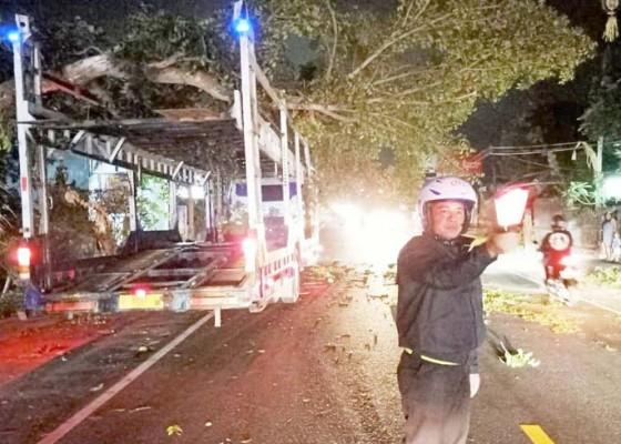 Nusabali.com - pohon-tumbang-timpa-trailer-lalu-lintas-tersendat-sejam