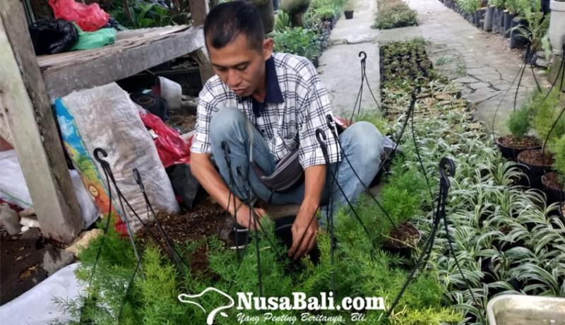 www.nusabali.com-tanaman-hias-minimalis-jadi-alternatif