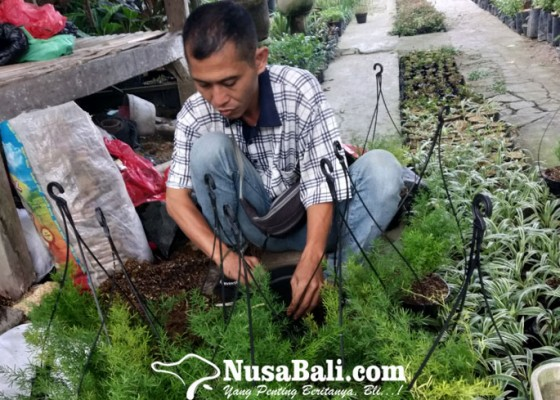 Nusabali.com - tanaman-hias-minimalis-jadi-alternatif