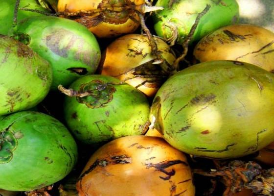 Nusabali.com - kementan-lepas-ekspor-produk-kelapa