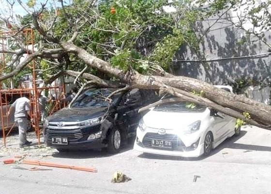 Nusabali.com - dua-mobil-tertimpa-pohon