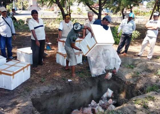 Nusabali.com - polsek-gilimanuk-musnahkan-ratusan-kilogram-daging-ilegal