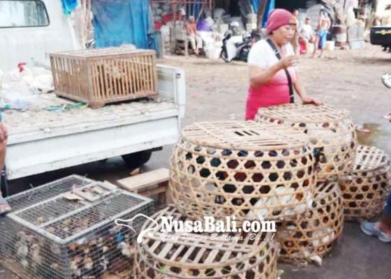 Nusabali.com - penampahan-kuningan-harga-ayam-buras-naik-15-persen