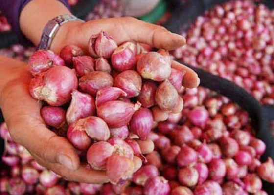 Nusabali.com - bawang-merah-ntb-ke-singapura-hingga-thailand