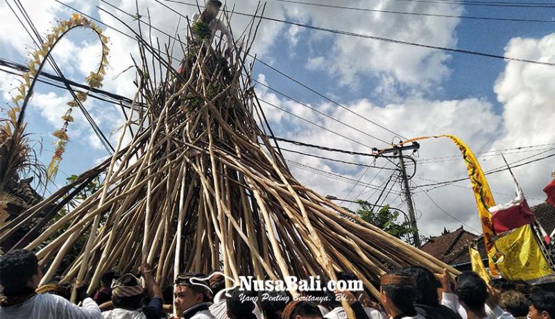 www.nusabali.com-tradisi-makotek-perayaan-kemenangan-dan-penolak-bala-di-hari-raya-kuningan