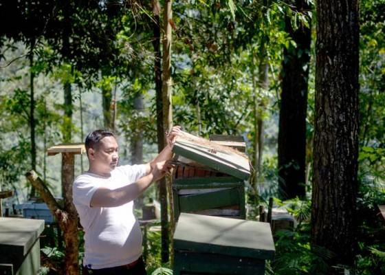 Nusabali.com - budidaya-lebah-madu