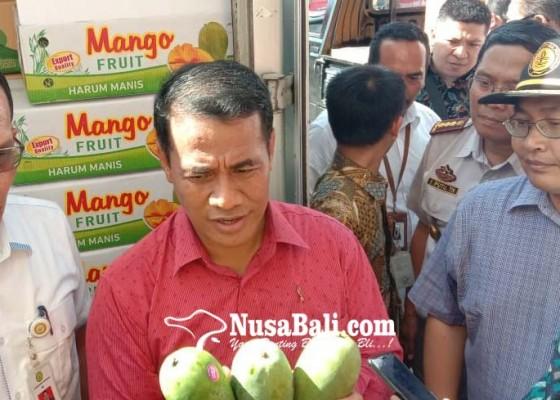 Nusabali.com - mangga-depaha-buleleng-tembus-rusia