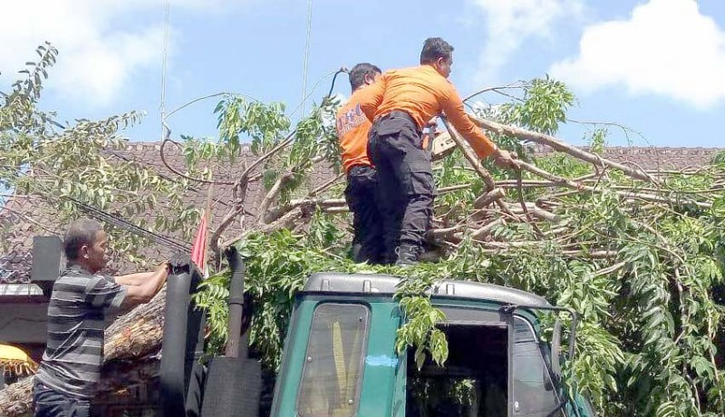 www.nusabali.com-truk-trailer-tabrak-pohon-lalin-jalan-raya-canggu-macet