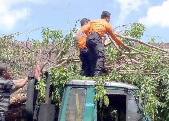 Nusabali.com - truk-trailer-tabrak-pohon-lalin-jalan-raya-canggu-macet