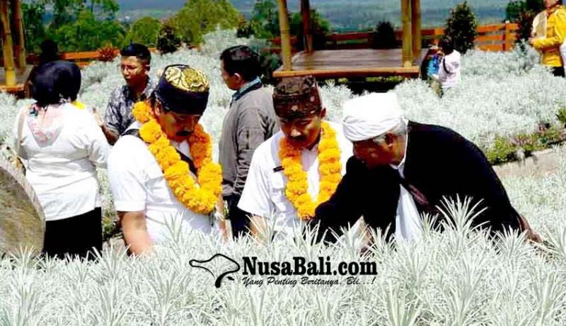 www.nusabali.com-pemkab-probolinggo-belajar-cara-tanam-edelweiss