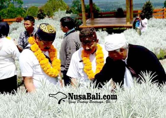 Nusabali.com - pemkab-probolinggo-belajar-cara-tanam-edelweiss