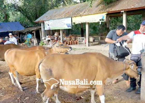 Nusabali.com - peternakan-cek-kesehatan-hewan-kurban