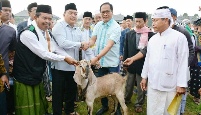 www.nusabali.com-pemkab-badung-berkurban-6-ekor-kambing