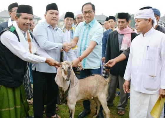 Nusabali.com - pemkab-badung-berkurban-6-ekor-kambing