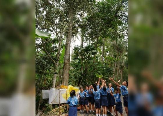 Nusabali.com - heboh-pohon-pule-keluarkan-tirta
