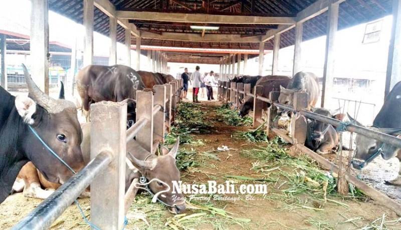 www.nusabali.com-idul-adha-pendapatan-perumda-pasar-mangu-giri-sedana-meningkat