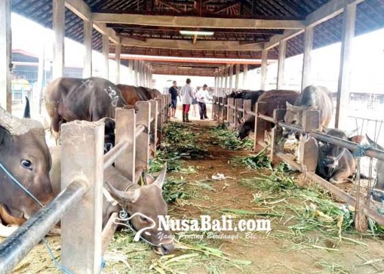 Nusabali.com - idul-adha-pendapatan-perumda-pasar-mangu-giri-sedana-meningkat