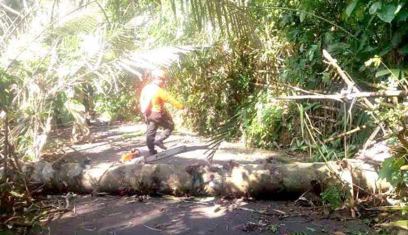 www.nusabali.com-pohon-tumbang-tutup-setengah-badan-jalan