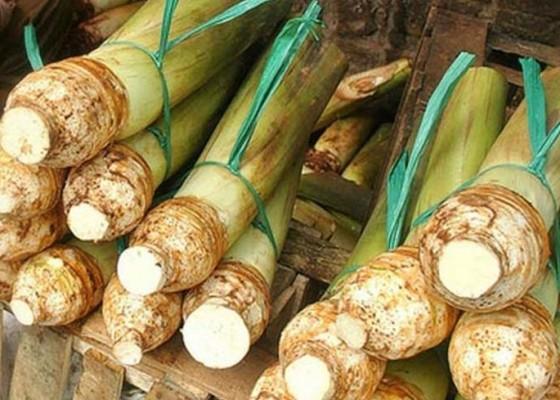 Nusabali.com - talas-ri-tembus-pasar-jepang
