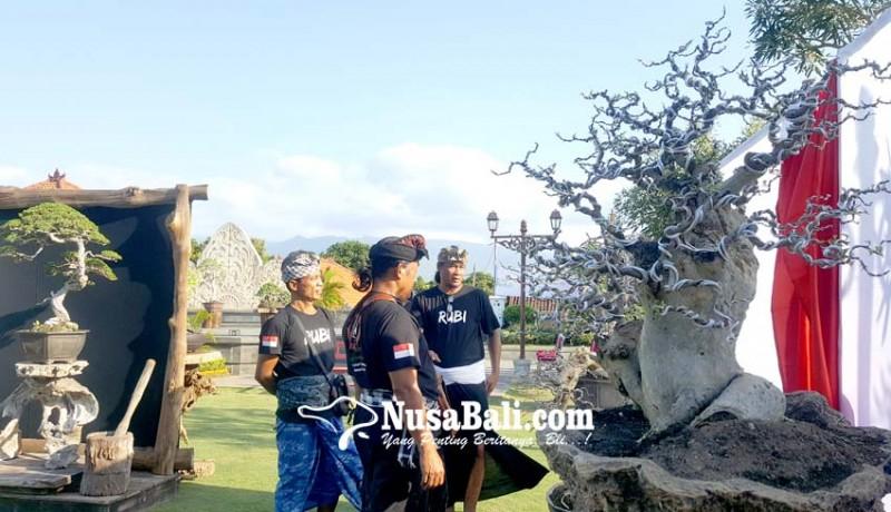 www.nusabali.com-pameran-bonsai-meriahkan-hut-ri-ke-74