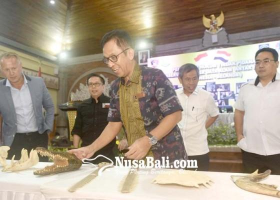 Nusabali.com - bareskrim-sita-kerangka-satwa-dilindungi-dari-belanda