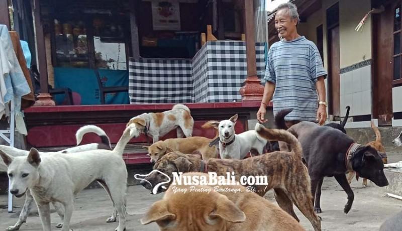 www.nusabali.com-pelihara-30-anjing-semua-dipungut-pasca-ditelantarkan-tuannya